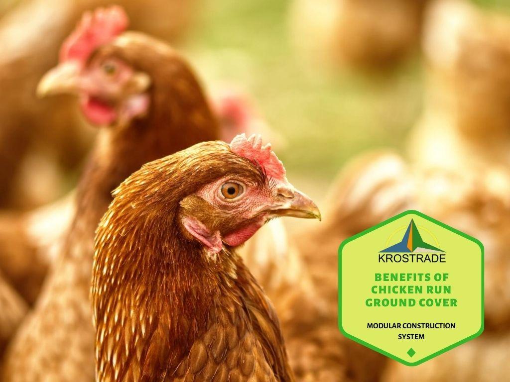 Benefits of own chicken coop