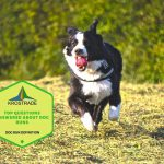 Dog Run Definition | Top Questions Answered About Dog Runs