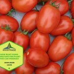 How Many Roma Tomatoes Per Plant You Can Produce?
