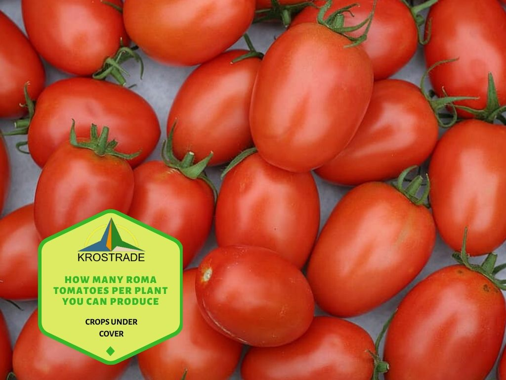 Tips to Estimate Roma Tomatoes on the Plant and Increase its Efficiency