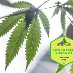 How To Start A Grow Op In The USA