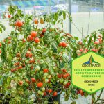 Ideal Temperature To Grow Tomatoes In A Greenhouse