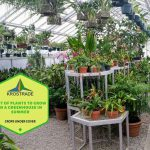 List Of Plants To Grow In A Greenhouse In Summer