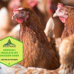 Should I Insulate My Chicken Coop