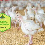 The Main Objectives Of Poultry Farming In 7 Easy Terms