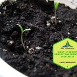 What Is The Best Compost For Growing Vegetables