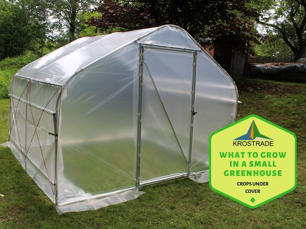 List of veggies and fruits which you can easily grow in your small greenhouse