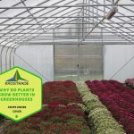 Why Do Plants Grow Better In Greenhouses? 4 Good Reasons!