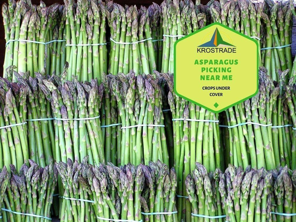 Asparagus Picking Near Me: Where Do Asparagus Grow?