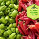 All About Growing Peppers in Southern California
