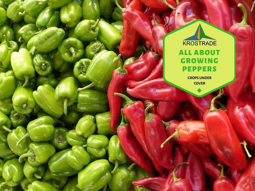 How Do You Grow Good Peppers