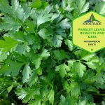 Parsley Leaves Benefits And Uses