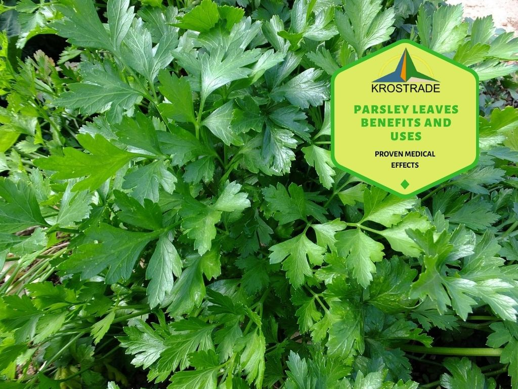 Parsley Leaves Benefits
