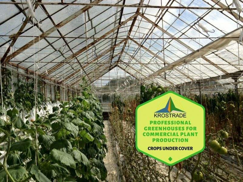 Professional Greenhouse For Commercial Plant Production - Krosagro