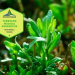 Tarragon Magical Properties: What Should To Know