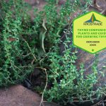 Thyme Companion Plants And Guide For Growing Thyme