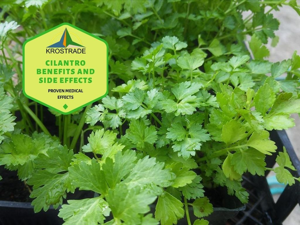 What Are The Benefits of Cilantro?