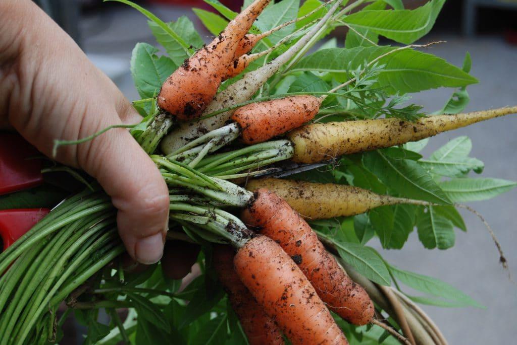 18 Best Vegetables To Grow In Nebraska