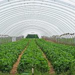 How To Keep Plants In Greenhouse From Growing Mold