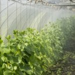 How to Grow Vegetables in a Greenhouse Year-Round