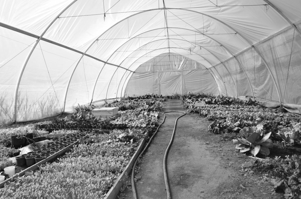 How to Clean A Greenhouse