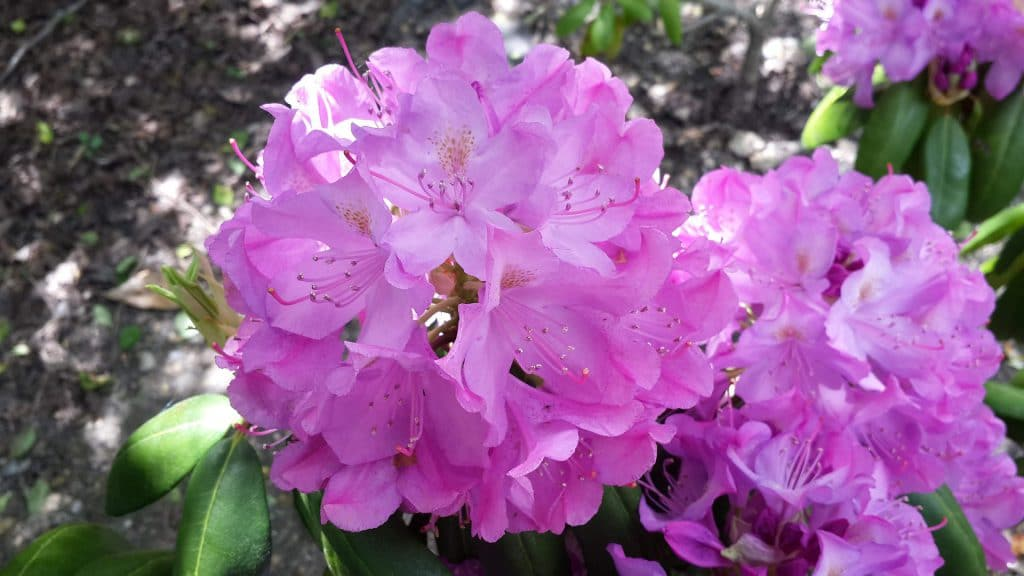 Best Perennials For Wyoming