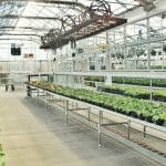All About Greenhouse Temperature Difference