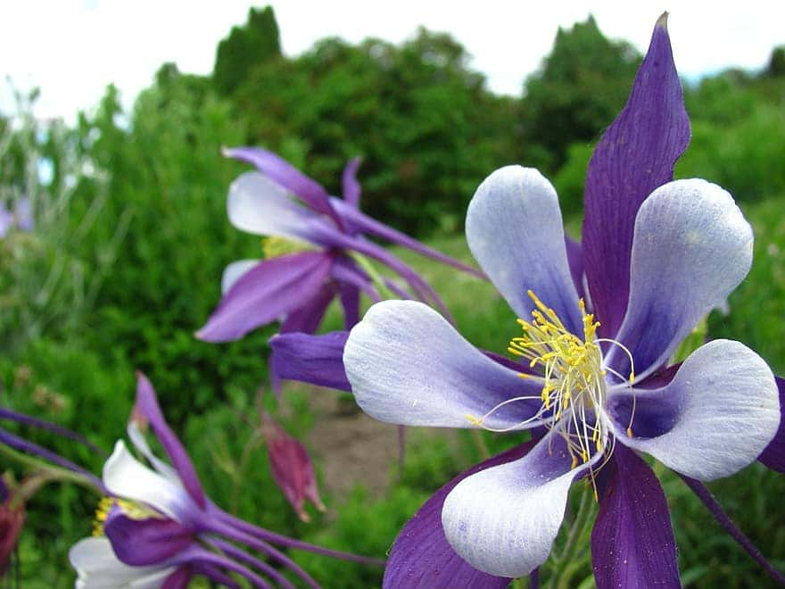All About the Best Flowers to Grow in Colorado