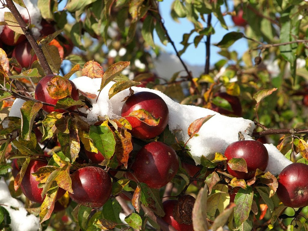 Fruit Trees That Grow In Wyoming