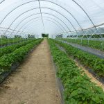 How Does Greenhouse Help In Growing Plants