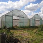 How Many Farmers Are Greenhouse Growing In The Southeast Region Of The United States?