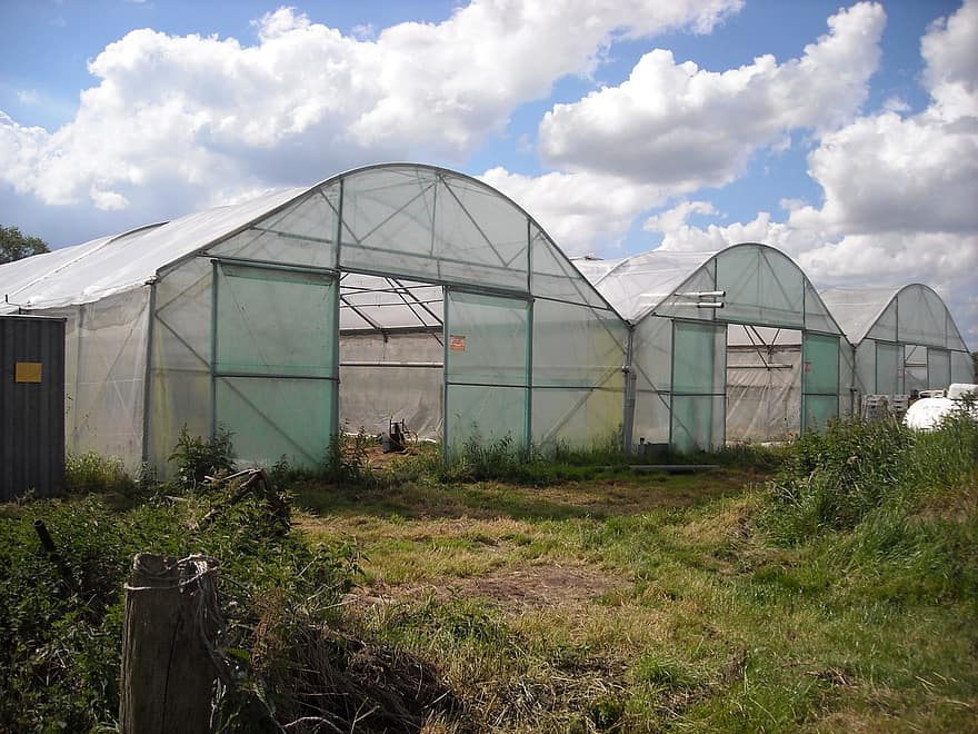 How Many Farmers Are Greenhouse Growing In The Southeast Region Of The United States
