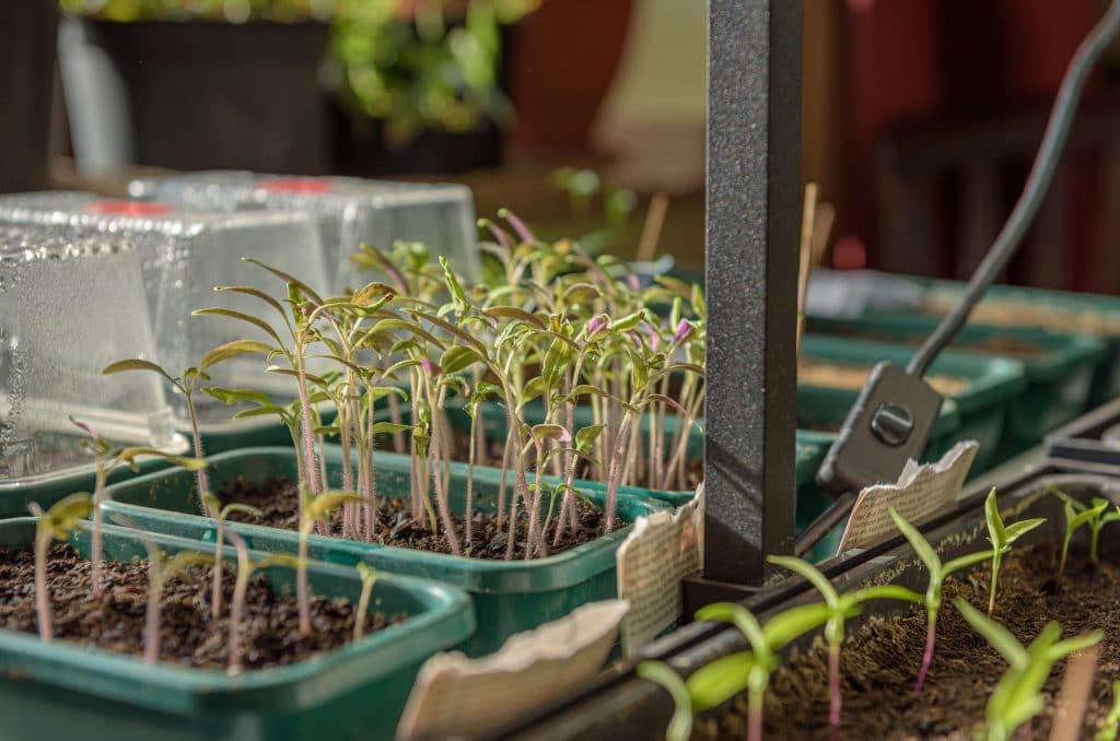 How to Keep Plants Warm Inside a Mini Greenhouse