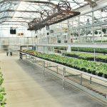How to Keep Your Backyard Greenhouse Heated