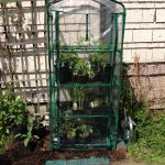 How to Use a 4-Tier Mini Greenhouse