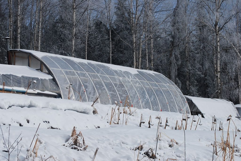 Is an Unheated Greenhouse Frost-Free