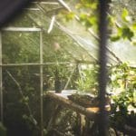 Recreate Wild Conditions When Growing Mint In A Greenhouse