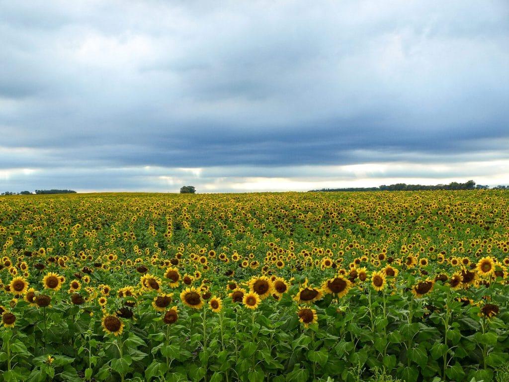 The North Dakota Growing Zone
