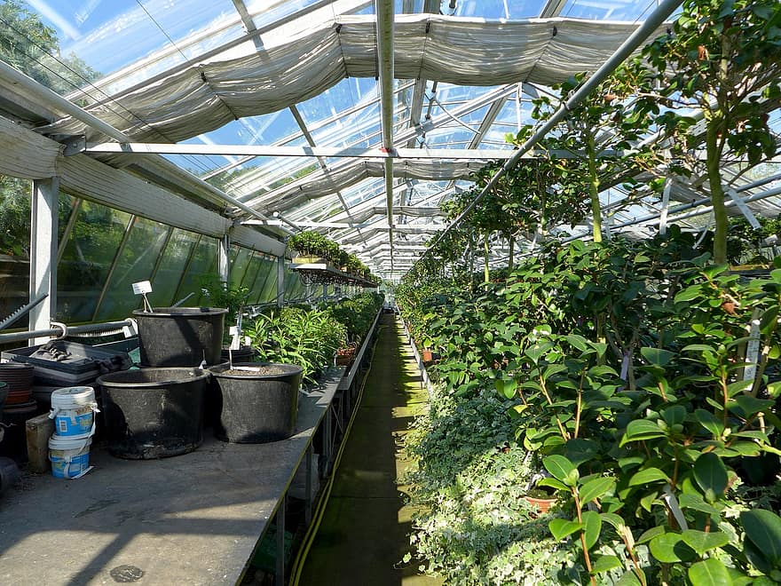 What Are The Benefits Of Growing Plants In A Greenhouse