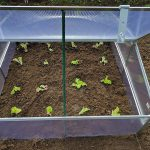What Do Mini Greenhouses Need to be Successful