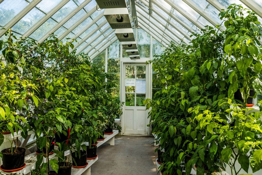 What To Know When Growing In A Greenhouse