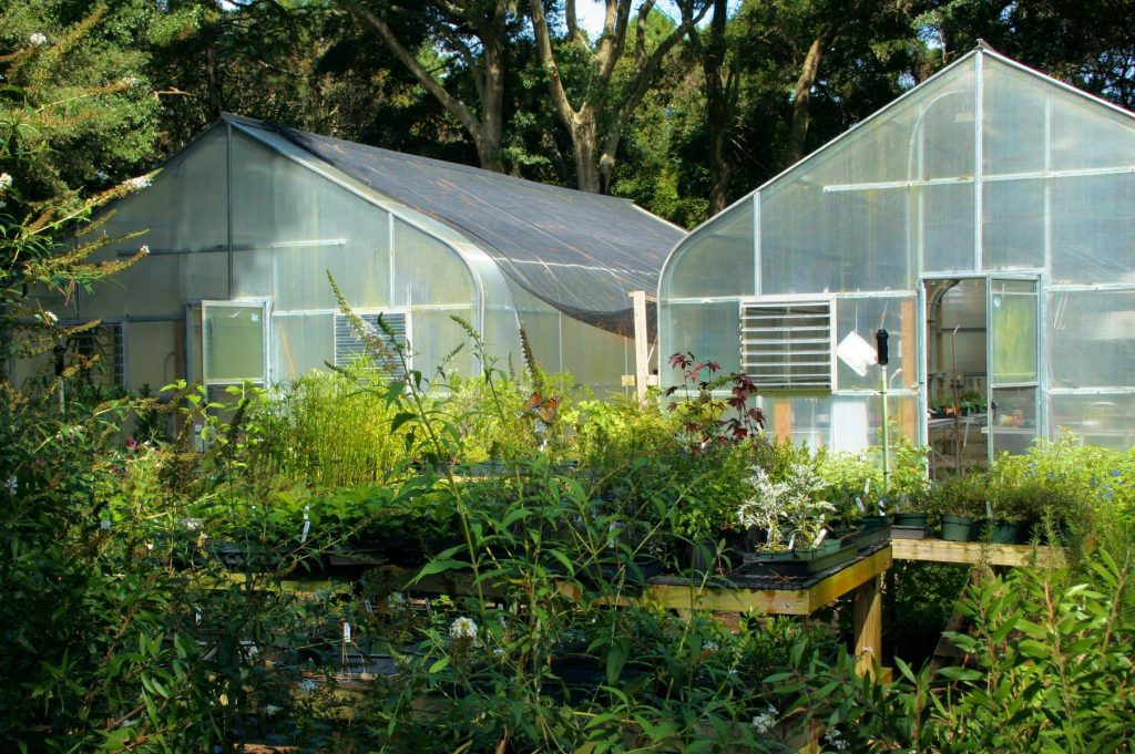 When Can Cannabis Plants Be Put Outside In Summer In Mini Greenhouse