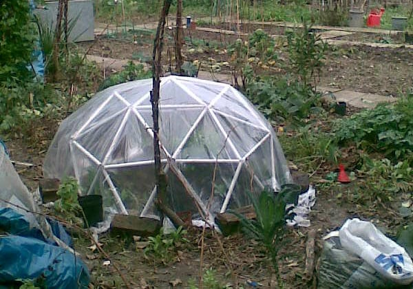 When Should You Plant in a Mini Greenhouse