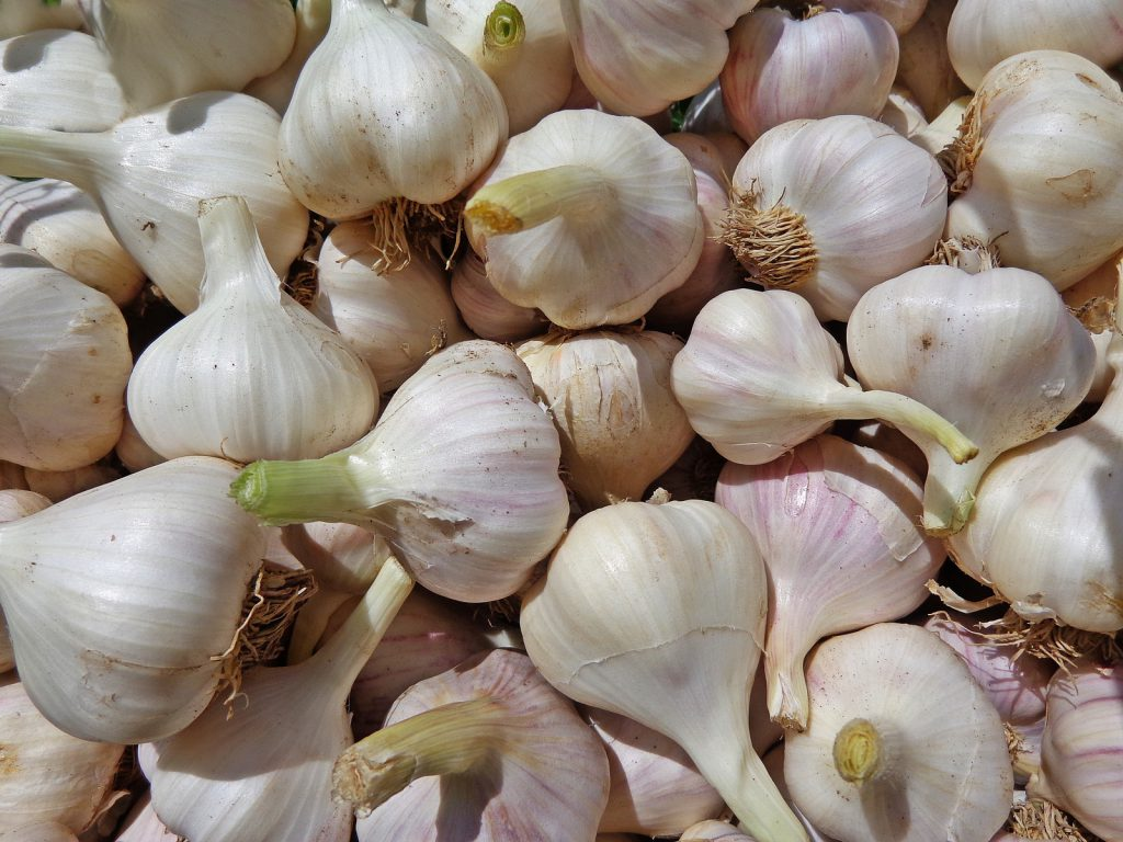 When To Plant Garlic In Nebraska For Success