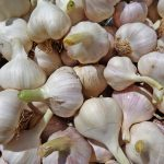 When To Plant Garlic In Nebraska For Success