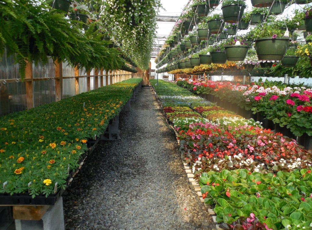 When To Start Flower Seeds In A Greenhouse For Spring Planting