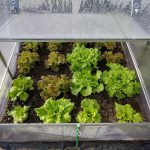 When To Start Portable Greenhouse Planting