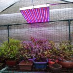 Which Gives Better Light For Growing Plants In A Greenhouse Fluorescent Or LED