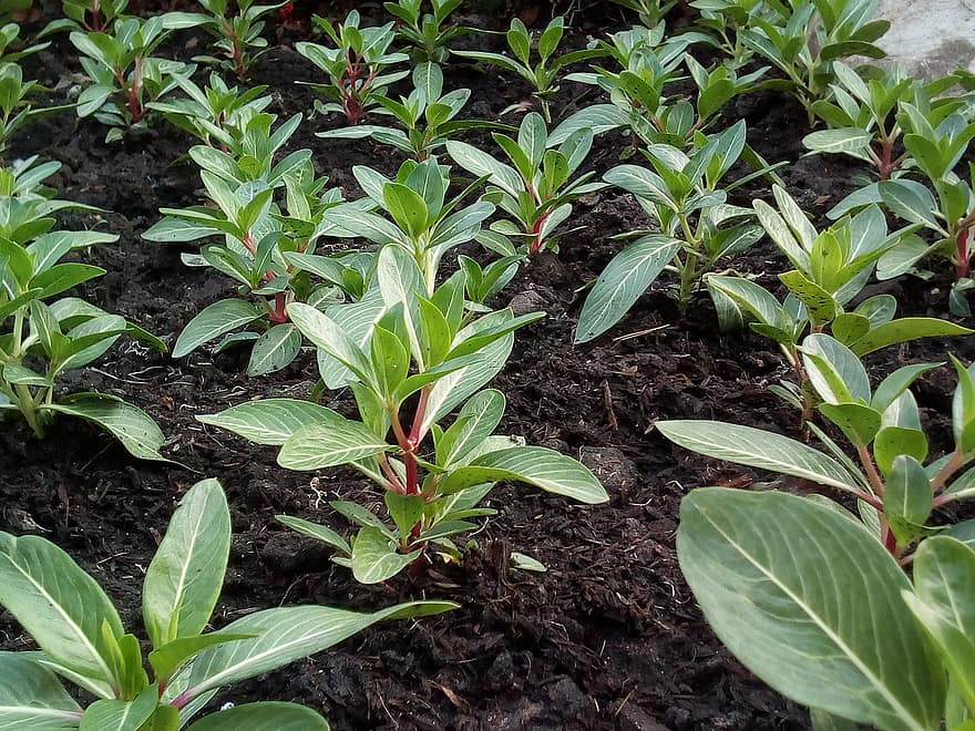 3 Best Ways To Measure Plant Growth