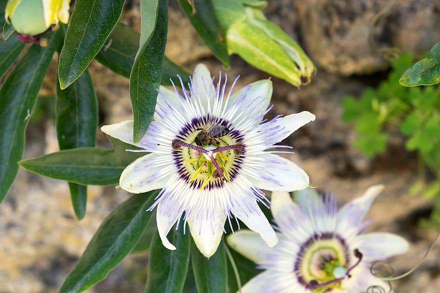 How To Care For Exotic Angel Plant For Success